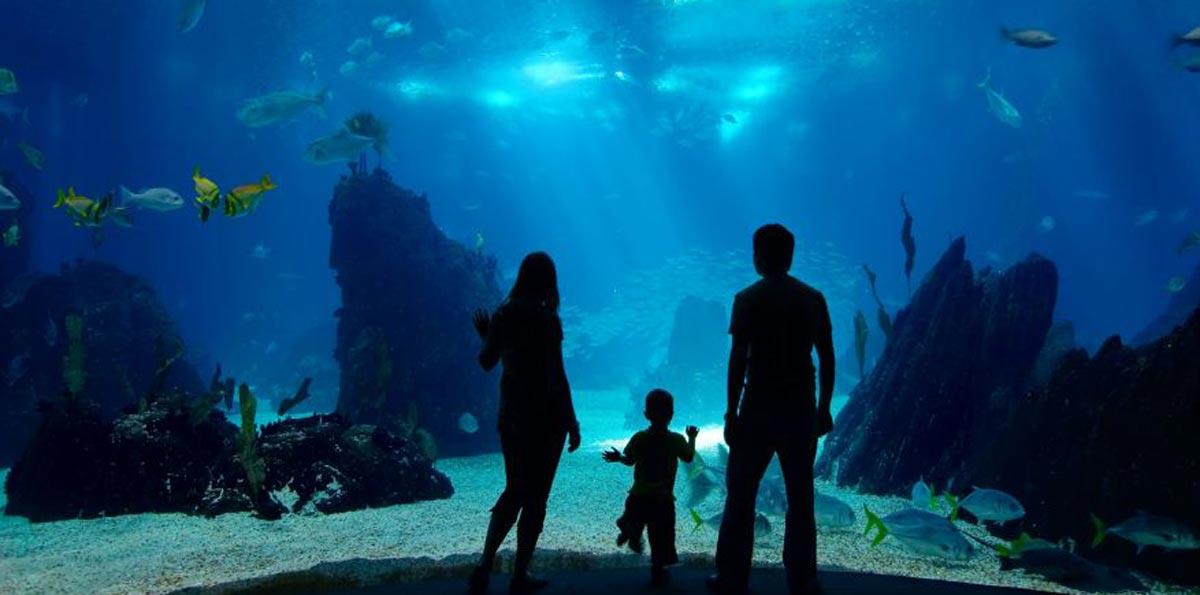 Hotel Near Baltimore National Aquarium